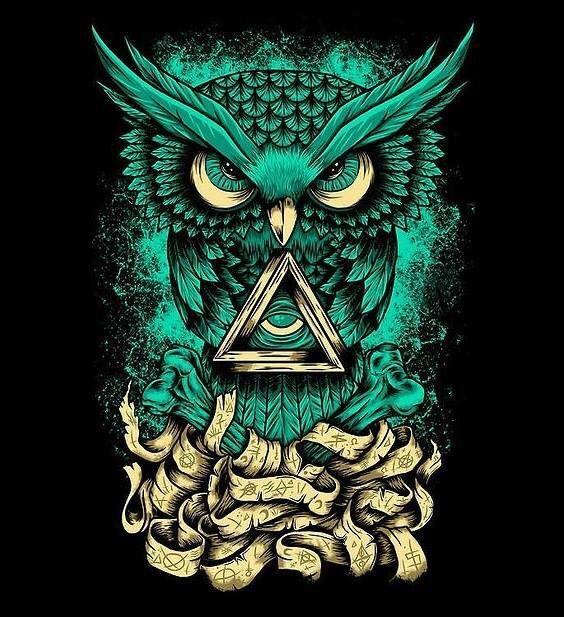 Crazy owl #owl #crazy