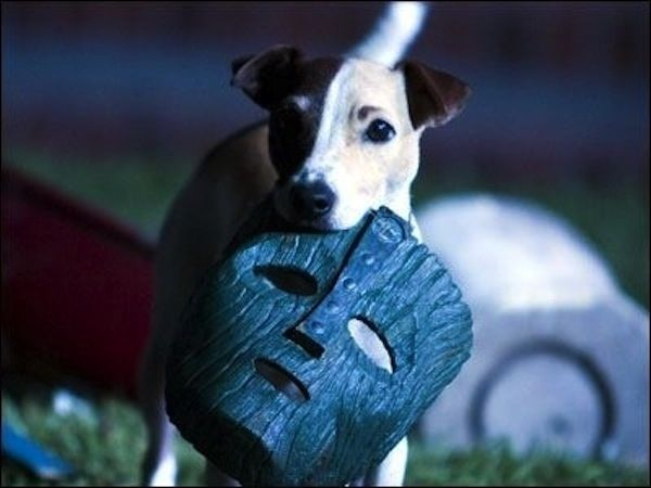 Milo, the Jack Russell Terrier, from THE MASK & SON OF THE MASK