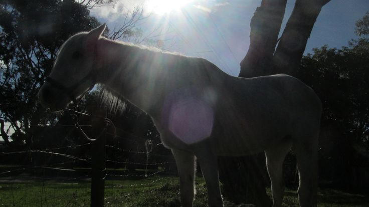 My horse, char! my photography :)