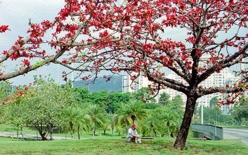 Parque do Flamengo, paisagismo modernista Rio de Janeiro - SkyscraperCity