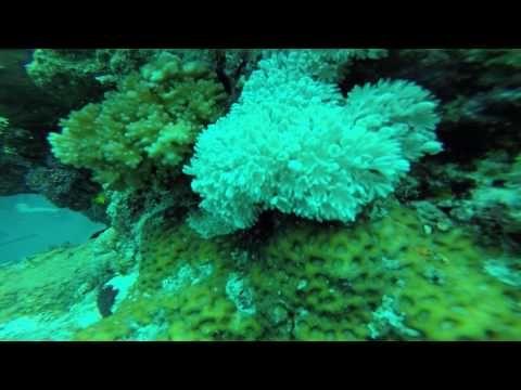 Reef, Fiji - YouTube
