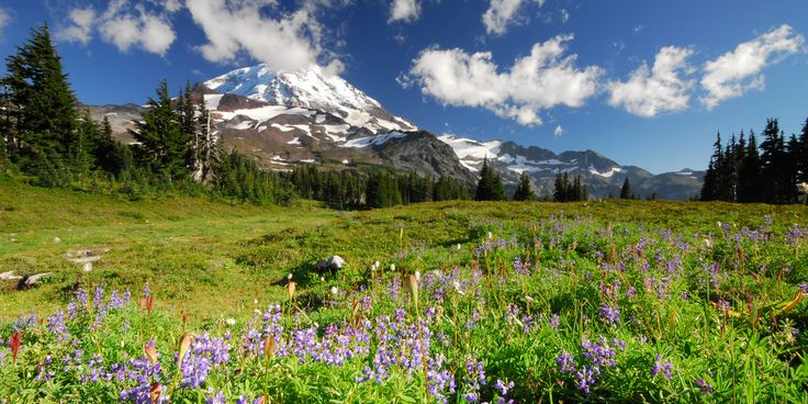 When it comes to exploring the Cascade Range, it doesn't get much better than these 5 day hikes within Mount Rainier National Park:  Burroughs Mountain Trail  Location: NE side of Mount Rainier at Sunrise Distance: 6.3 miles Elevation Gain: 1,000 feet