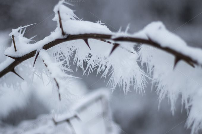 Check out Branch with snow by Pixelglow Images on Creative Market