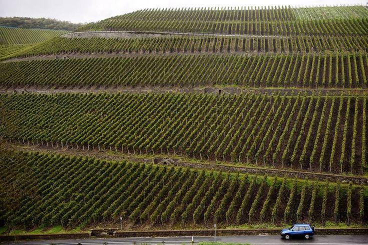 RIESLINGLAND. Fra de bratte vinmarkene i Nahe kommer strålende tørre rieslingviner. Les om de beste rieslingene i høst.