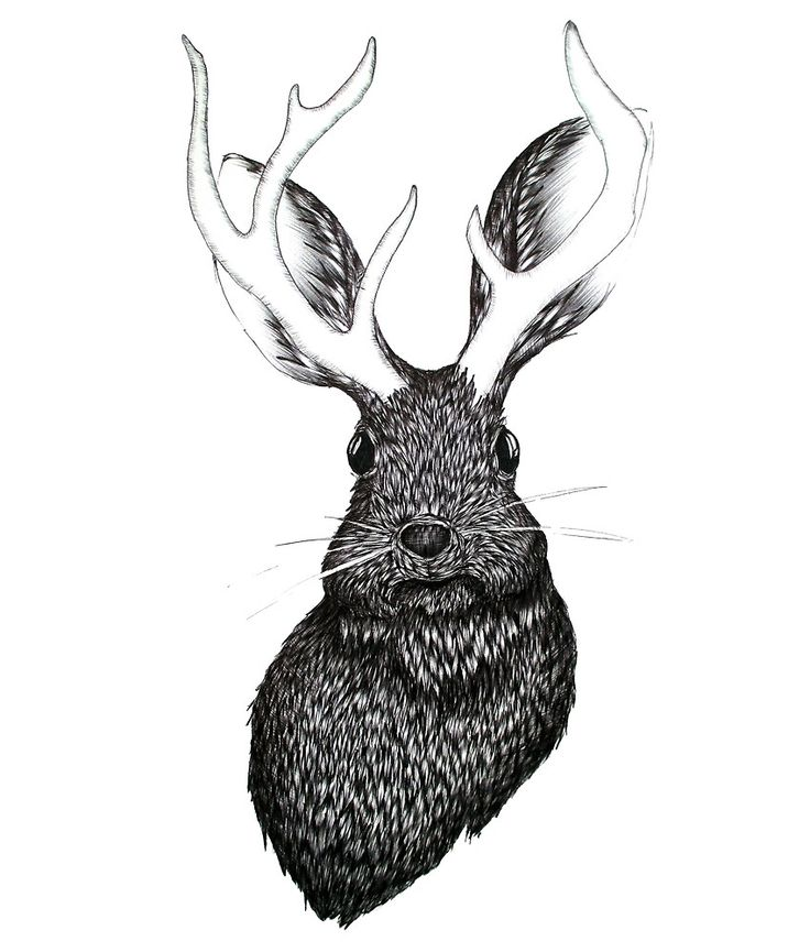 The Jackalope by ECMazur, drawn with ballpoint pen. #art #illlustration #penart #drawing #animalart #jackalop #fantasy #magical