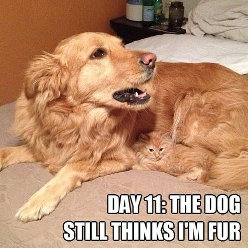 Overprotective Dog Loves His Cat