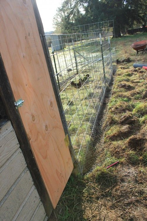 Keeping Predators Out Of Chicken Runs Garden Outside Pinterest Chicken Runs Fort Knox And