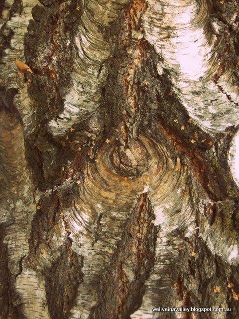 bark in Tasmania