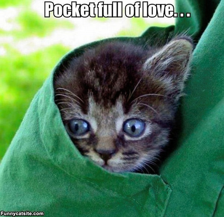 Pocketful of lovePretty Eye, Cat Pics, Funny Animal Pics, Body Image, Funny Kittens, Animal Cat Kittens, Hair Style, Pocket Kitty, Cute Kittens