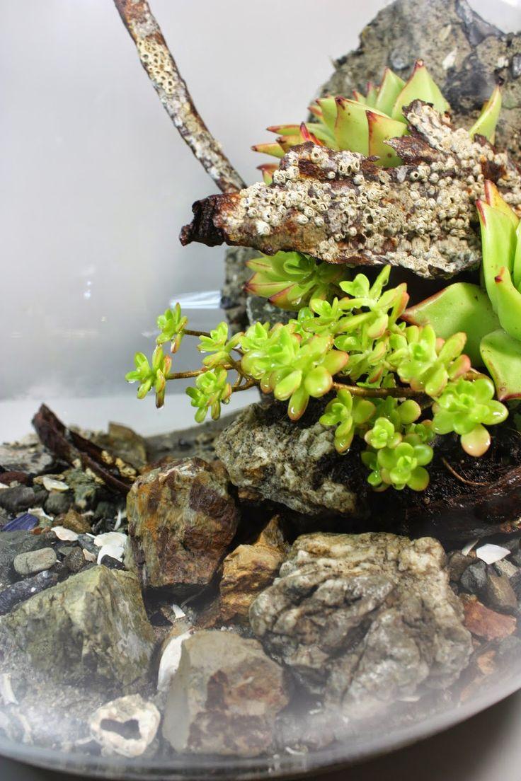 the slug and the squirrel. Moss PlantTerrarium IdeasTerrariumsDriftwood  IdeasAir ...