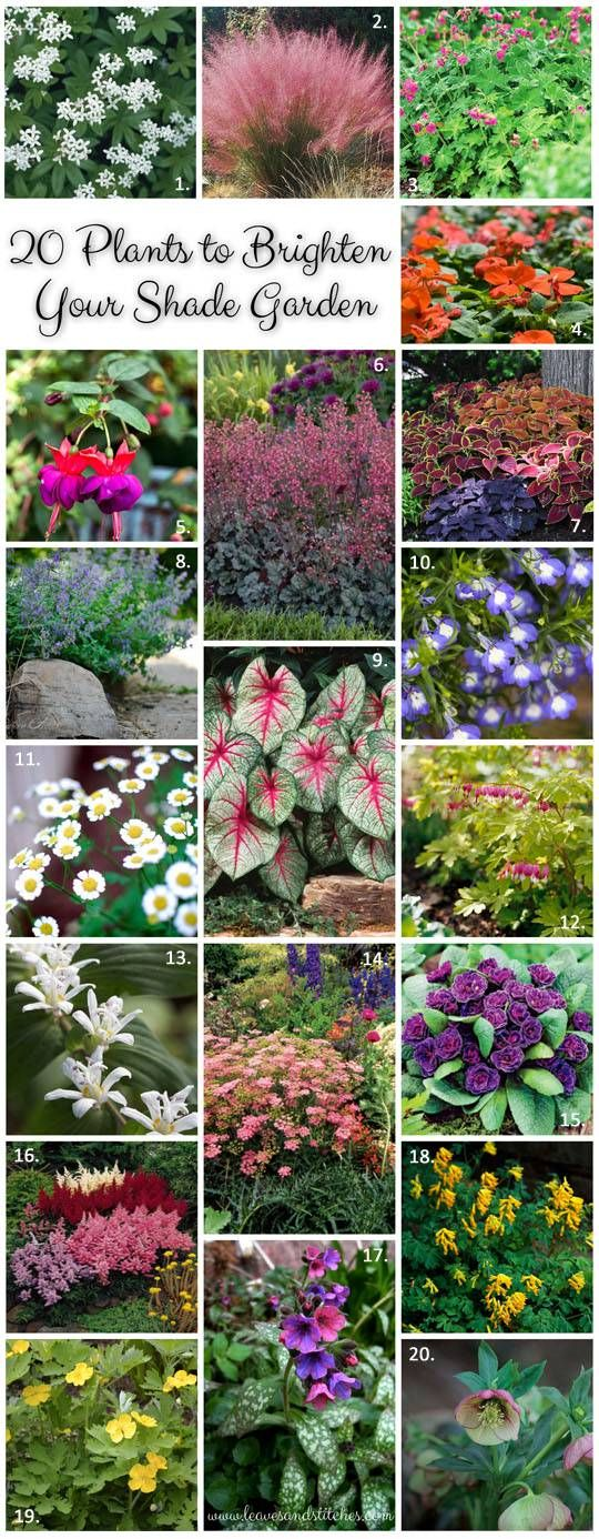 20 plants to brighten your shade garden. Annuals, perennials and herbs for shady places.