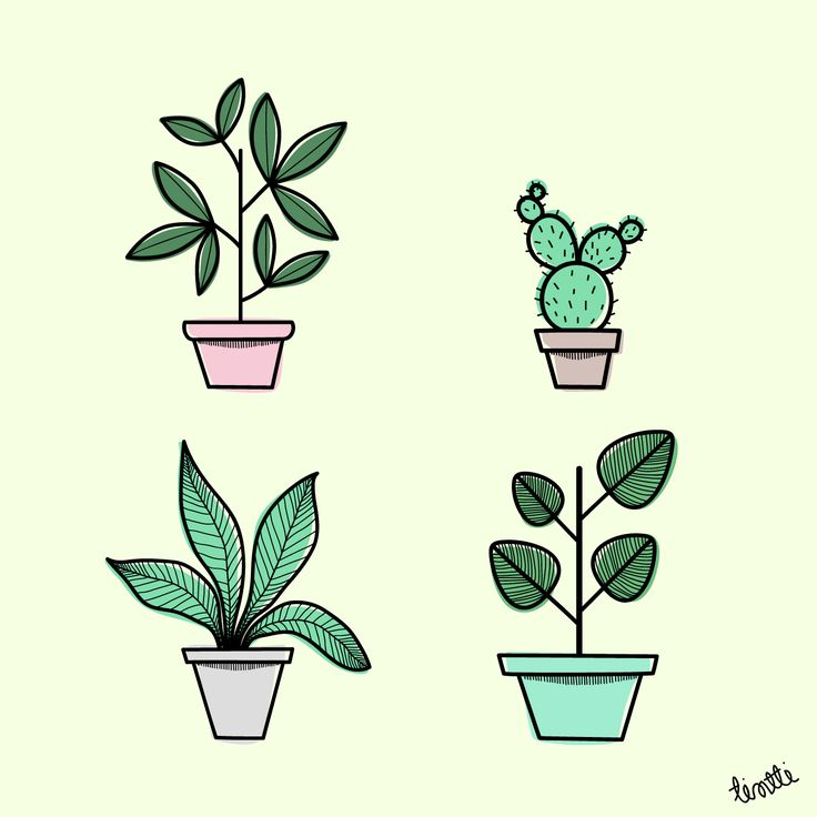 Potted Plants Illustration #plantillustration #kuvitus