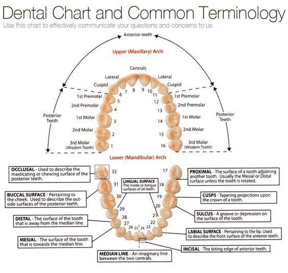 Top Dental Schools in UK - Study Dentistry in the UK