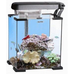 25 best ideas about nano aquarium on pinterest betta for Aquarium recifal nano