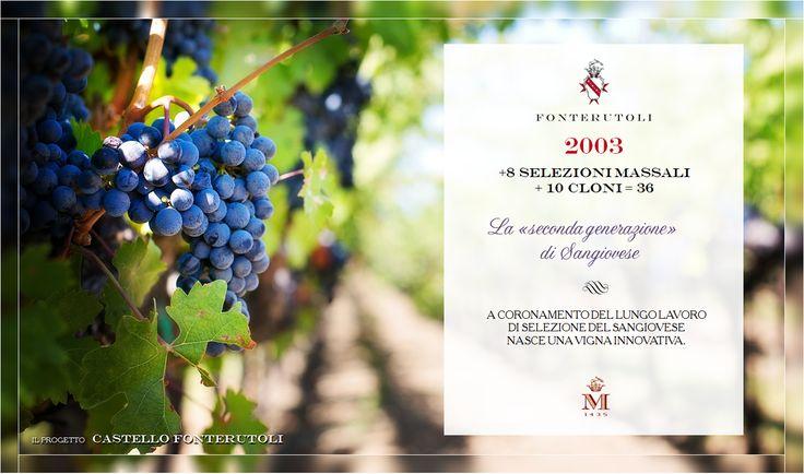 Il lungo lavoro di selezione del Sangiovese porta alla nascita di una vigna innovativa. @marchesimazzei #fonterutoli #marchesimazzei #wine #tuscany