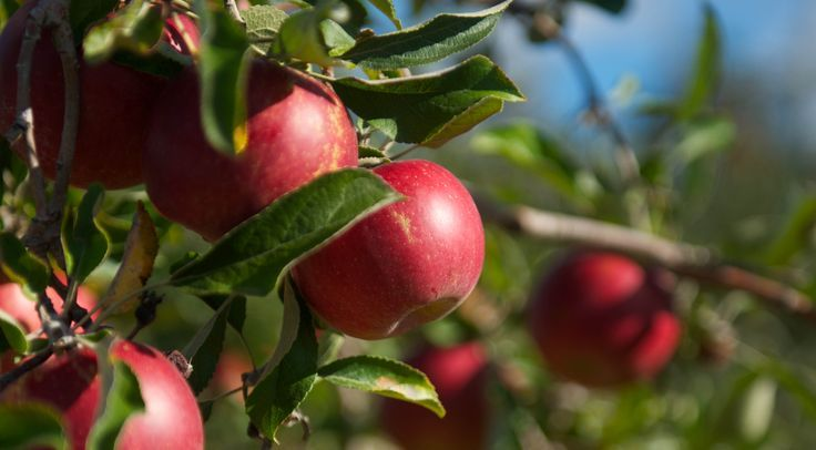 Visit Dee's Lakeshore Farm in Saugatuck, Michigan this summer that offers a variety of freshly priced fruits and vegetables. Fruit picking is a great family activity!