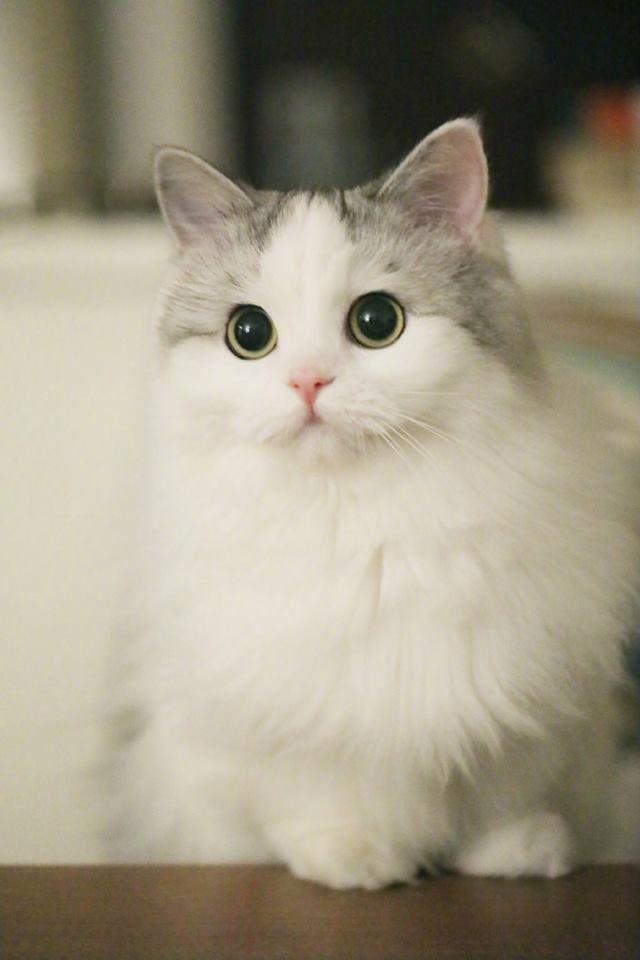 изображение Cute kittens, Thú con, Stuffed animals