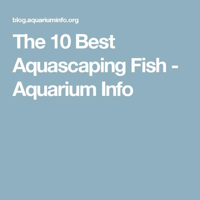 The 10 Best Aquascaping Fish - Aquarium Info