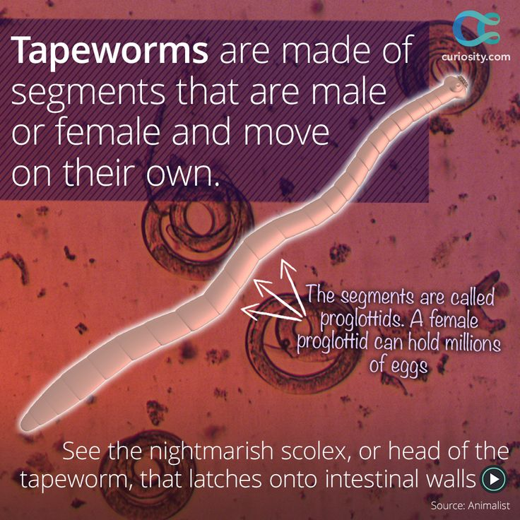 an overview of the different types of parasitic worms Explanation about parasitic diseases in birds  protozoa and worms  different types of colloidal silver.