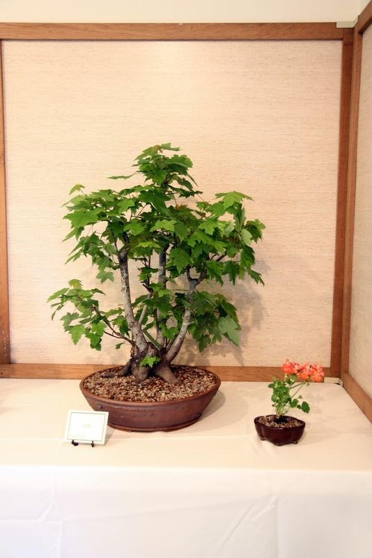 1800 flowers bonsai review