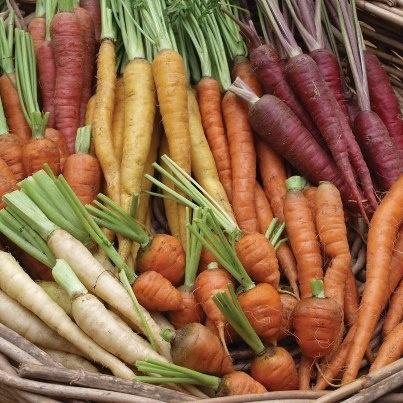 A kaleidoscope of carrots!