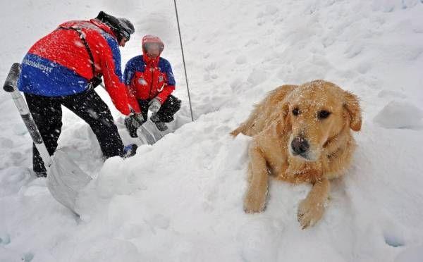 ドイツ南部のガルミッシュパルテンキルヘンで、雪崩に巻き込まれた人を捜索する山岳救助隊員と救助犬(2011年01月19日) 【EPA=時事】