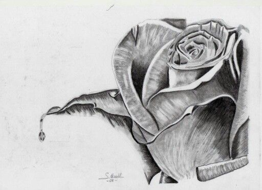 45 best Flores dibujos images on Pinterest  Draw Flowers and