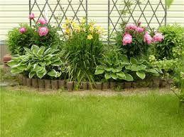 Картинки по запросу лилейник в саду