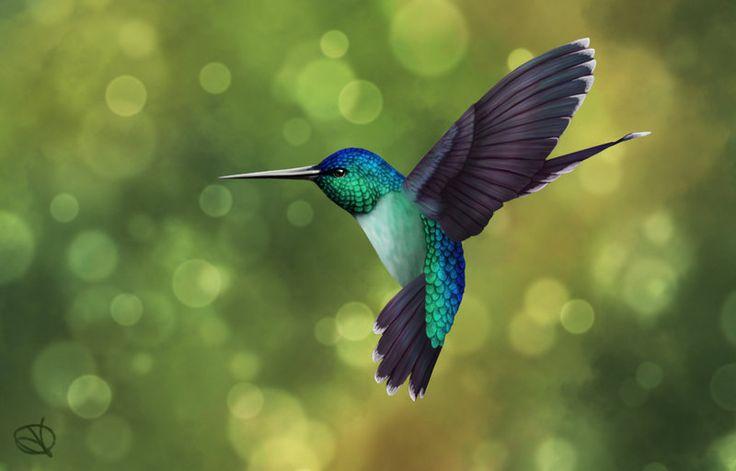hummingbird - Google Search
