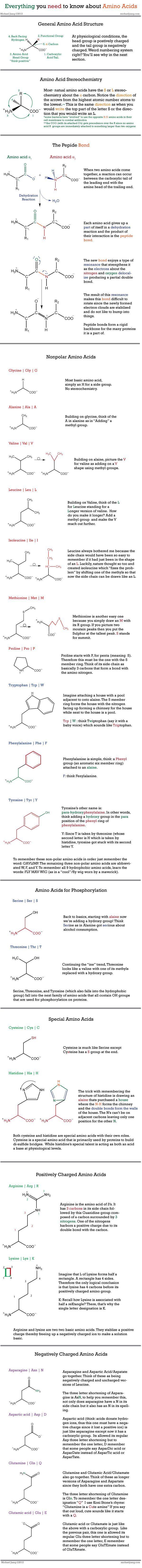 Amino Acid Cheat Sheet