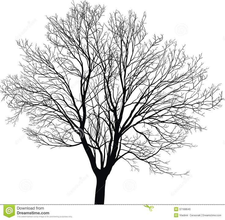 black and white oak tree drawing black and white oak tree
