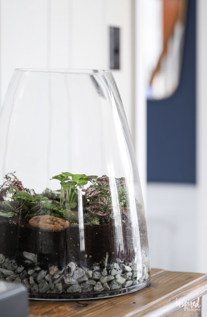 Learn How To Make A Terrarium Terrarium Plants Diy Garden The