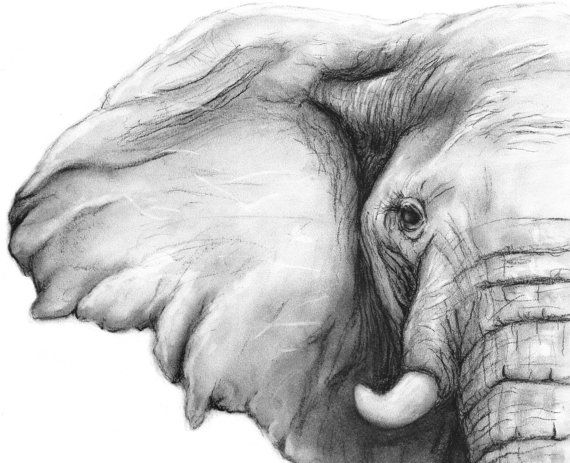 Elephant Charcoal Drawing GICLEE PRINT - Elephant Decor - Elephant Nursery - Black and White Art - Gift for Her - Gift for Mom - Artist: Rachael Howatson