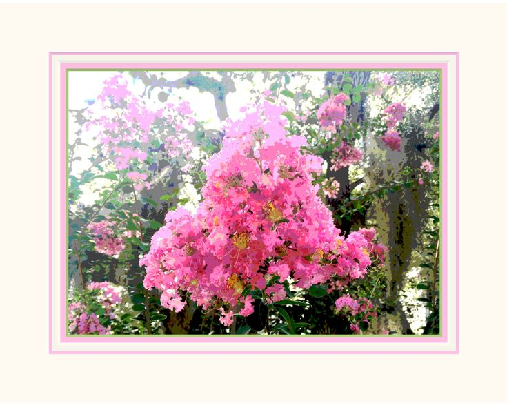 Pink Floral Wall Art. Crepe Myrtle. Matted 8 x 10 size. Ready to Frame. For Wall Grouping. Saturated Colors. Original Design. Shabby Chic. by VintageArtForLiving on Etsy https://www.etsy.com/listing/488299727/pink-floral-wall-art-crepe-myrtle-matted