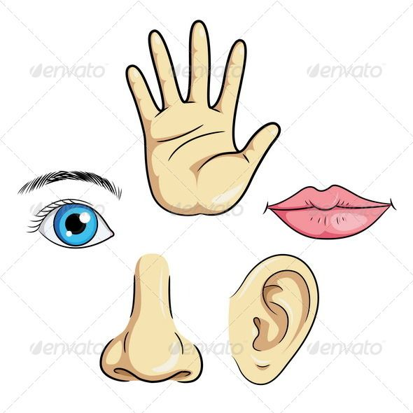 Realistic Graphic DOWNLOAD (.ai, .psd) :: http://jquery-css.de/pinterest-itmid-1006476685i.html ... Eye Ear Nose Lips & Hand ...  art, baby, cartoon, child, ear, education, eye, face, fingers, hand, hear, human, icon, kid, learn, lips, listen, mouth, nose, organ, part, people, see, senses, sensory, set, sign, smell, symbols, touch  ... Realistic Photo Graphic Print Obejct Business Web Elements Illustration Design Templates ... DOWNLOAD :: http://jquery-css.de/pinterest-itmid-1006476685i.html