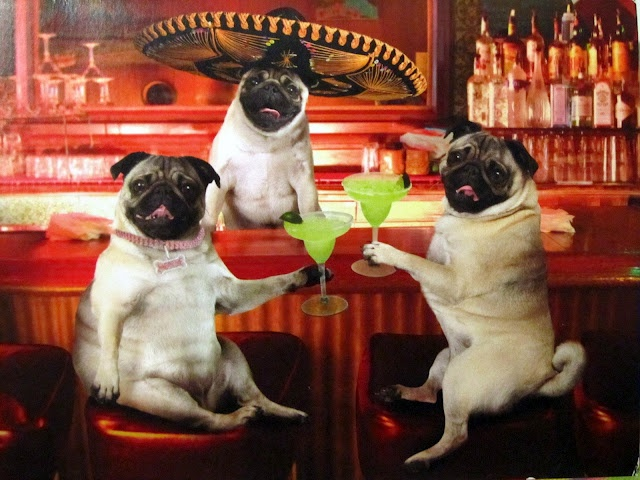Pug Party with Macky
