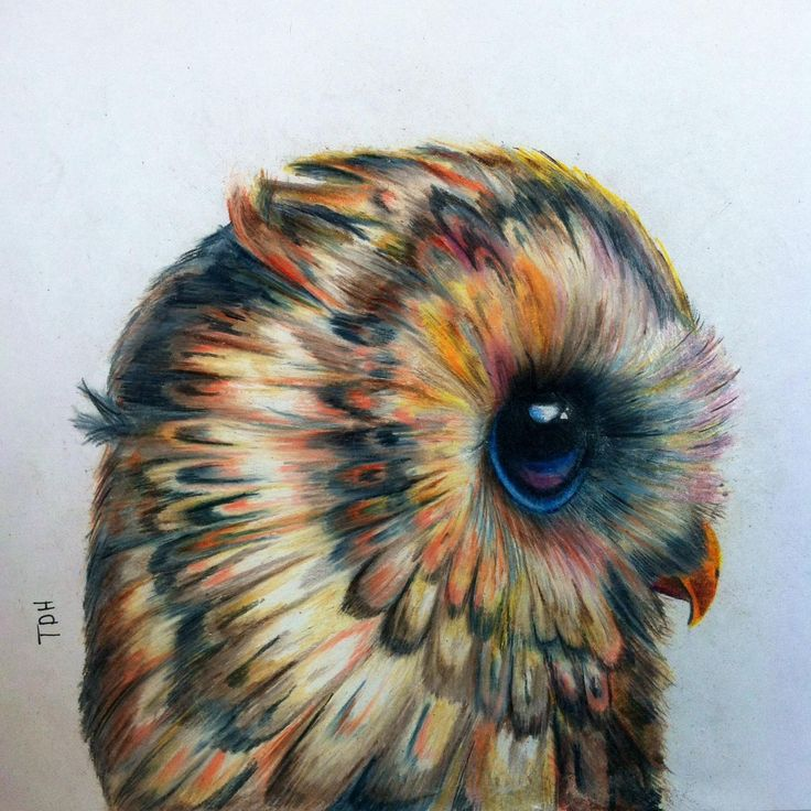 Owl Illustration Pinned by www.myowlbarn.com