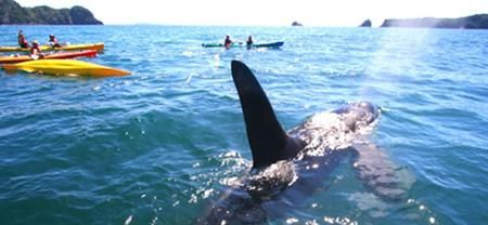 Cathedral Cove Kayak | Coromandel Adventures | Coromandel Town Tours & Activities | Coromandel Peninsula.