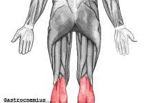 Gastronemio o gemelos – origen, inserción, acción e inervación