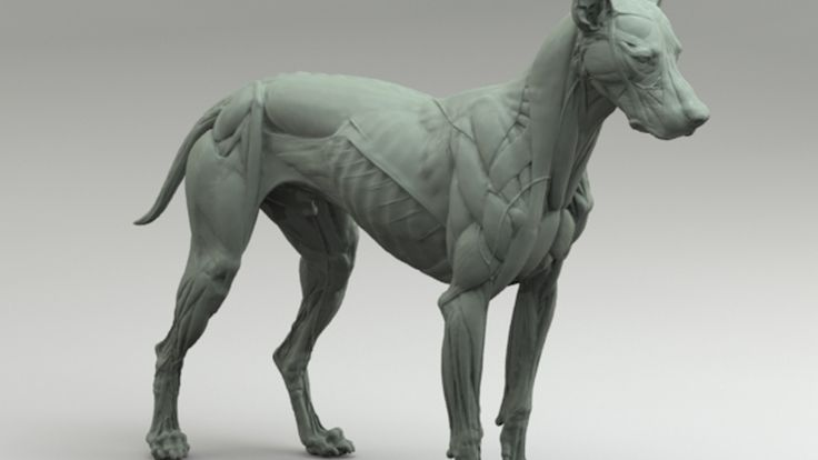 Canine Anatomy Sculpture in the spirit of the Animaliers of the 19th Century. Great for reference, research or displayed as fine art.
