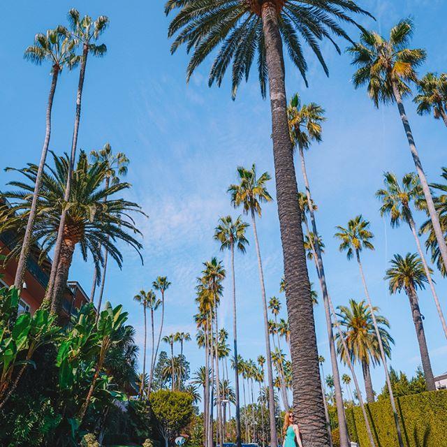 Getting lost among those beautiful palms🌟 🌴#BeverlyHills #LA    #Regram via @bubbly.moments