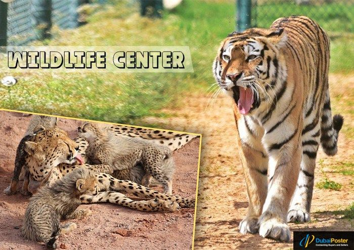 Look out the #best #animal #attractions that seeks great attention in #UAE
