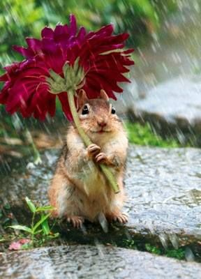 Un #ecureuil sous la #pluie s'abritant sous une #fleur ㋡ ㋡ ㋡