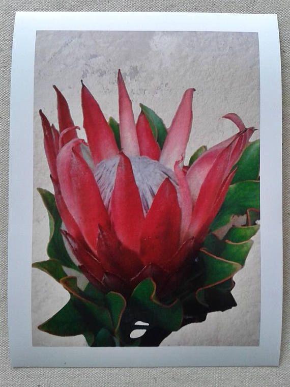 King Protea Flower Printable Wall Art Digital Print Flower Printable Protea Flower Botanical Art