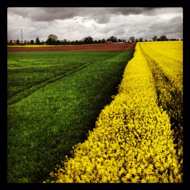 Fields of gold:) taken from train in Poland #field #landscape #nature