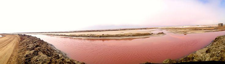 Walvis Bay sale rosa _ Namibia