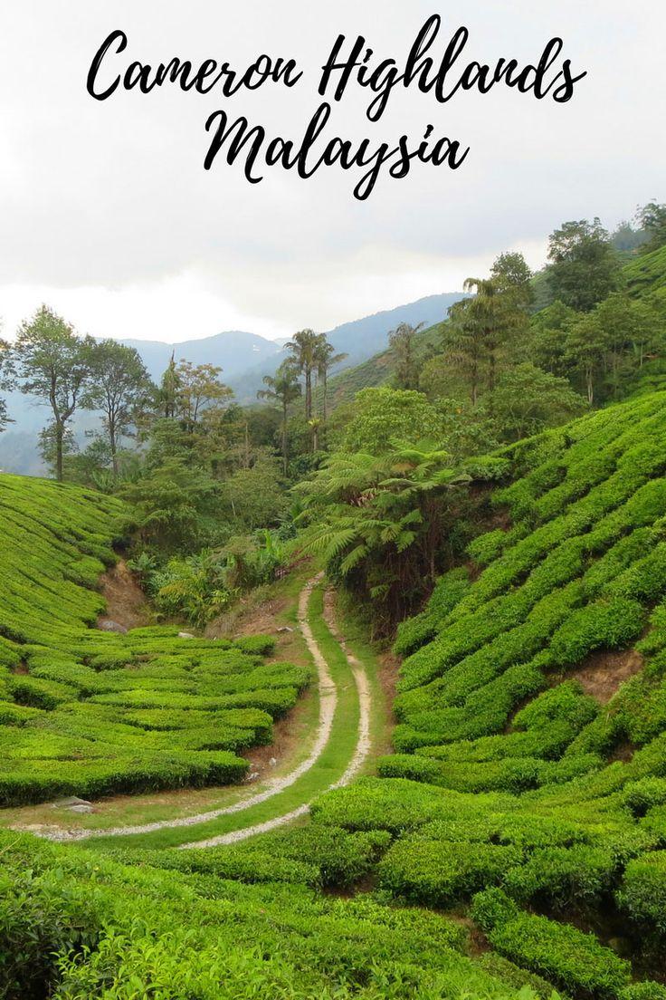Teeplantagen soweit das Auge reicht. Das sind die Cameron Highlands in Malaysia.