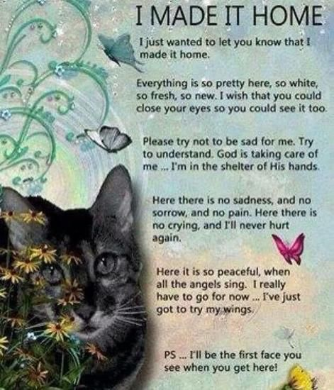 "Rosemary Rannes - ""To continue this Journey in Truth with Humility and Respect for all Life"" - My Care2   In loving memory of my feral cat Smokey ~ your 'wings' came too soon my boy ;(  July 29, 2017"