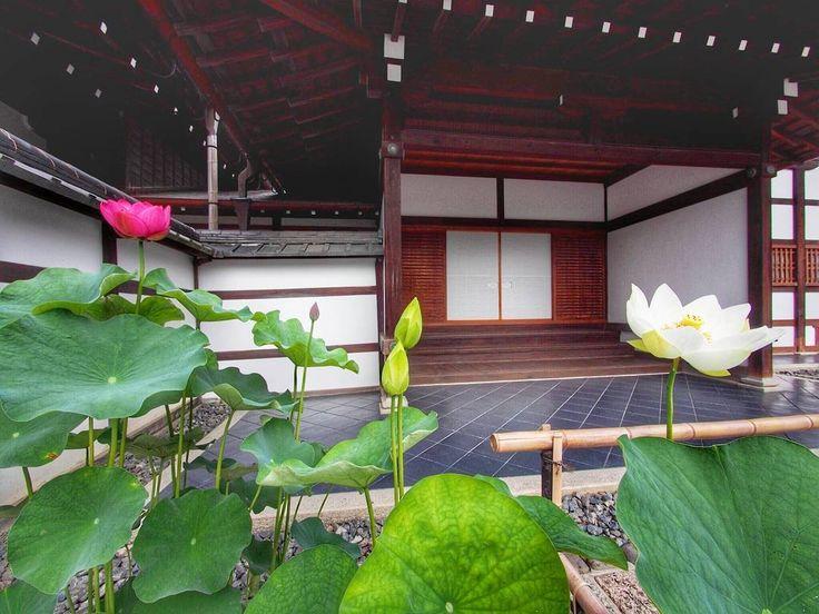 Tenryu-ji Temple Kyoto Japan 霊亀山 天龍資聖禅寺 #Kyoto #flowers #京都 #花 #社寺  今日は、祇園祭の宵山。 京都は、凄い人、人、人でしょうね🍀 素敵な午後をお過ごしください😊