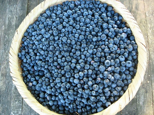blueberries blueberries blueberries blueberries blueberries #berryblue